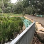 Thriving Bio-Retention Basin